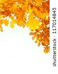 beautiful autumn background...   Shutterstock . vector #117014845