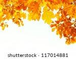 beautiful autumn background... | Shutterstock . vector #117014881