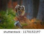 owl in forest habitat  tree... | Shutterstock . vector #1170152197
