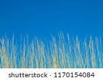 looking up at tall dried...   Shutterstock . vector #1170154084