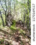 deciduous forest with rocks and ... | Shutterstock . vector #1170169117
