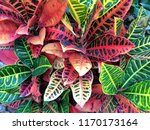 close up image of a beautiful... | Shutterstock . vector #1170173164