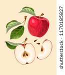 vector set of apple fruits and... | Shutterstock .eps vector #1170185827