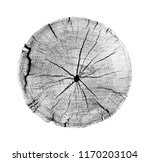 large piece of round wood with... | Shutterstock . vector #1170203104