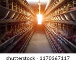poultry farm  chickens sit in... | Shutterstock . vector #1170367117