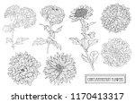 decorative chrysanthemum...   Shutterstock .eps vector #1170413317