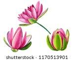 set of beautiful pink lotuses ... | Shutterstock . vector #1170513901