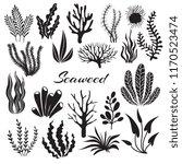 aquarium seaweeds. underwater... | Shutterstock .eps vector #1170523474