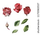 roses and leaves  watercolor ... | Shutterstock . vector #1170583537