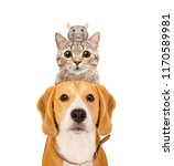 Stock photo funny portrait of pets isolated on white background 1170589981
