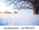 Big Oak Tree  In A Winter Snowy ...