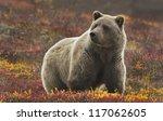 grizzly  ursus arctos  bear ...   Shutterstock . vector #117062605