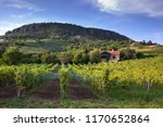 vineyards in balaton highland ... | Shutterstock . vector #1170652864