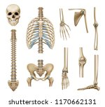 realistic human skeleton parts... | Shutterstock .eps vector #1170662131