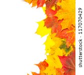 Beautiful autumn maple leaves with copy space for your text - stock photo