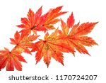 autumn maple leaves | Shutterstock . vector #1170724207