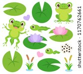 set of cute frogs. egg masses ... | Shutterstock .eps vector #1170762661