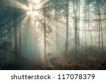 Magic December Forest With Sun...