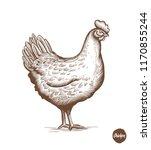 Chicken Hand Drawn Illustratio...