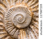 Large Spiral Fossil Shell Of A...