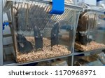 c57bl 6 mice in the ivc cage to ...   Shutterstock . vector #1170968971