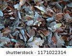 Frozen Fallen Leaves With Mild...