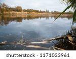 golden autumn reeds. bright...   Shutterstock . vector #1171023961