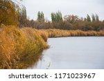 golden autumn reeds. bright...   Shutterstock . vector #1171023967