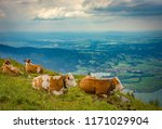 cow lying on mountain valley...   Shutterstock . vector #1171029904