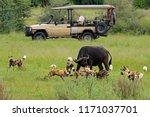 african safari  car with nature ... | Shutterstock . vector #1171037701