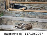 a dog and a cat sleep together...   Shutterstock . vector #1171062037