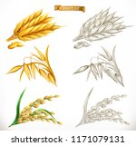 ears of wheat  oats  rice. 3d... | Shutterstock .eps vector #1171079131
