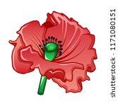 garden poppy icon. cartoon of... | Shutterstock .eps vector #1171080151