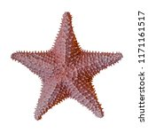 starfish isolated on white... | Shutterstock . vector #1171161517