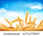 golden wheat ears and blue sky. ... | Shutterstock .eps vector #1171172947