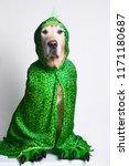 dog photo shoot for halloween  | Shutterstock . vector #1171180687