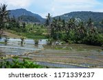 rice terraces and mountains.... | Shutterstock . vector #1171339237