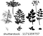illustration with black dill... | Shutterstock .eps vector #1171359757