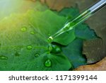 scientist with natural drug and ... | Shutterstock . vector #1171399144