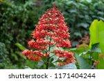 beautiful wildflower at banaue  ...   Shutterstock . vector #1171404244