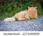 stray cat resting at the street.... | Shutterstock . vector #1171444054