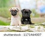 Stock photo fotos fotograf fratografie 1171464007