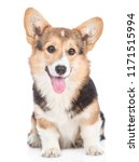 Stock photo pembroke welsh corgi dog with open mouth looking at camera isolated on white background 1171515994