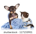 Stock photo kitten and the puppy looking in the camera focus on a dog isolated on white background 117153901