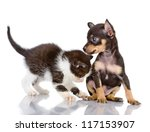 Stock photo the kitten plays with a puppy isolated on white background 117153907