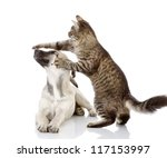 Stock photo the cat beats a paw on a nose of a dog isolated on white background 117153997