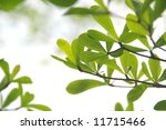 Young tropical leaves in the forest - stock photo