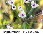 beautiful and amazing little...   Shutterstock . vector #1171552507