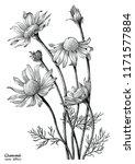 chamomile flowers hand draw... | Shutterstock .eps vector #1171577884