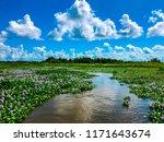 louisiana bayou winding through ...   Shutterstock . vector #1171643674